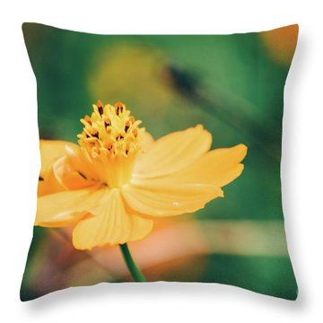 Throw Pillow featuring the photograph Cosmos  by Andrea Anderegg