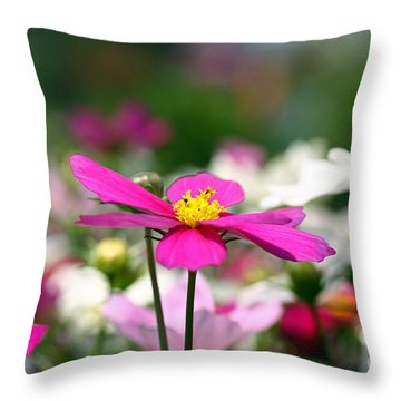 Cosmos Flowers Throw Pillow by Denise Pohl