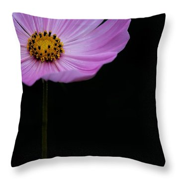Throw Pillow featuring the photograph Cosmos On Black by Lisa Knechtel