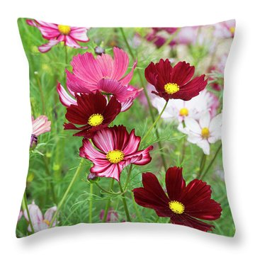 Throw Pillow featuring the photograph Cosmos Velouette by Tim Gainey