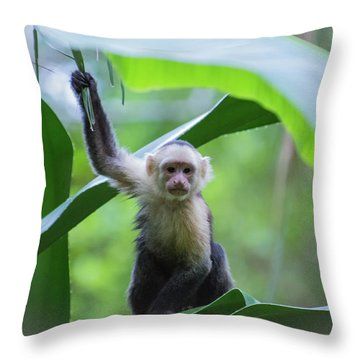 Costa Rica Monkeys 1 Throw Pillow