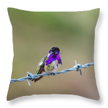 Costa's Hummingbird Throw Pillow