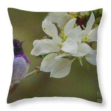 Costas Hummingbird On An Anacacho Orchid Branch Throw Pillow