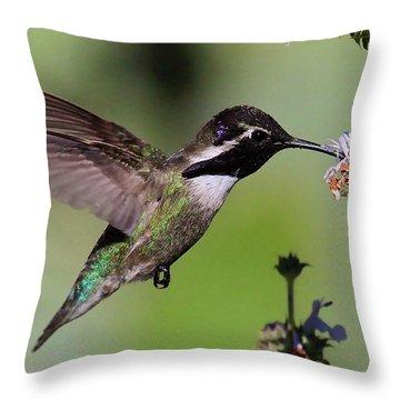 Costa's Hummingbird Throw Pillow by Paul Marto