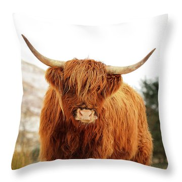 cottish Highland Cow Loch Lomond Throw Pillow