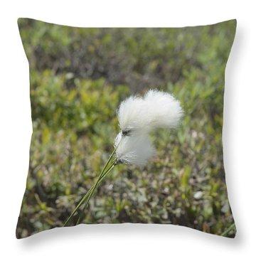 Cotton Grass -eriophorum Virginicum- Throw Pillow by Erin Paul Donovan
