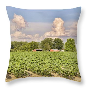 Throw Pillow featuring the photograph Cotton Hasn't Flowered Yet by Jan Amiss Photography