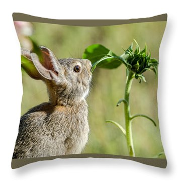 Cottontail Rabbit Eating A Sunflower Leaf Throw Pillow