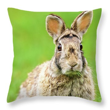 Cottontail Rabbit Throw Pillow