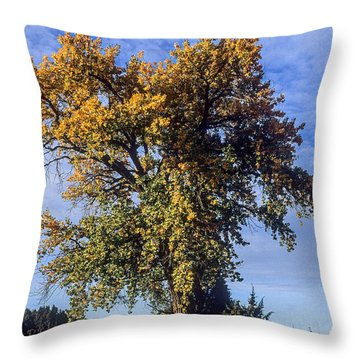 Cottonwood #3 Colorado Ranch Country In Fall Throw Pillow