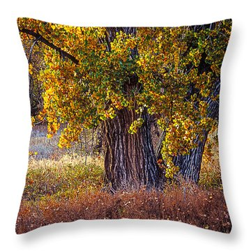 Cottonwood #6 Fountain Creek, Colorado In Fall Throw Pillow