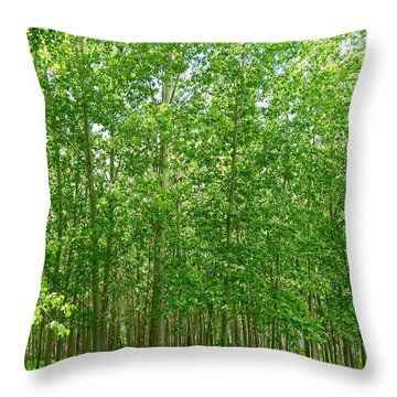 Cottonwood Oasis Throw Pillow by Will Borden