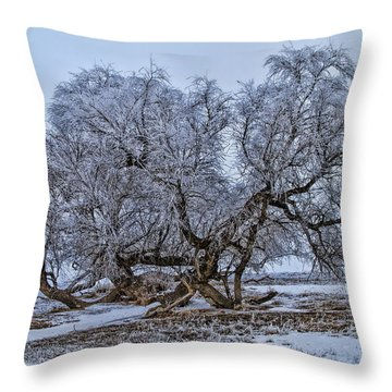 Cottonwood Sprawl Throw Pillow by Alana Thrower