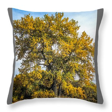 Cottonwood Tree # 12 In Fall Colors In Colorado Throw Pillow