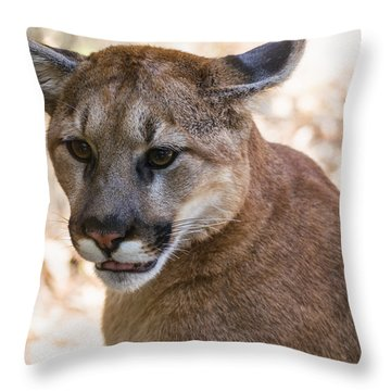 Cougar Portrait Throw Pillow