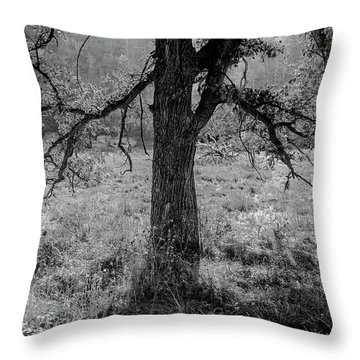 Coulee Oak Throw Pillow