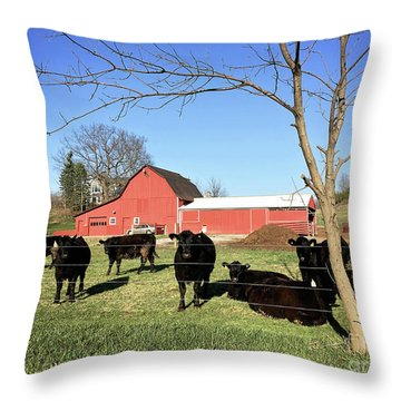 Country Cows Throw Pillow