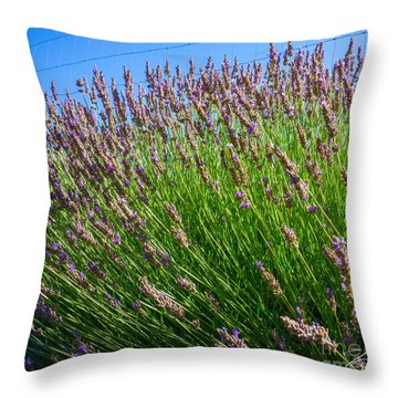 Country Lavender I  Throw Pillow