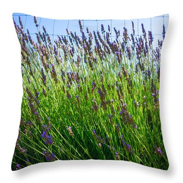 Country Lavender II Throw Pillow