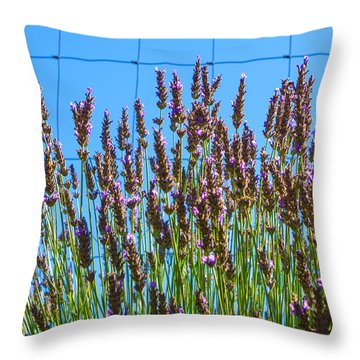 Country Lavender IIi Throw Pillow