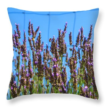 Country Lavender Iv Throw Pillow