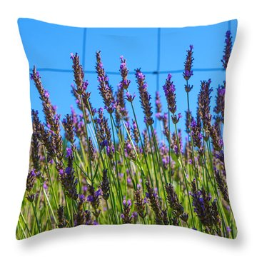 Country Lavender Vii Throw Pillow