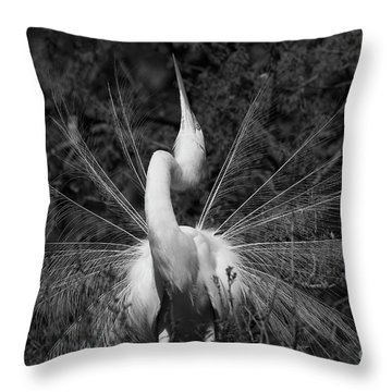 Great Egret Courtship Plumes Throw Pillow