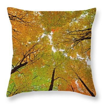 Throw Pillow featuring the photograph Cover Up by Tony Beck