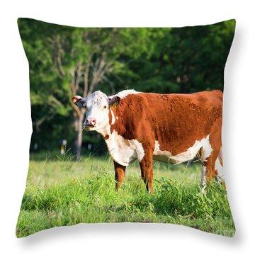 Cow #1 Throw Pillow