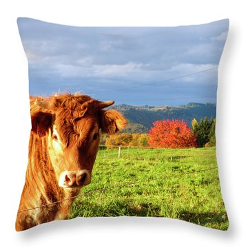 Cow And Autumn Colors  Throw Pillow