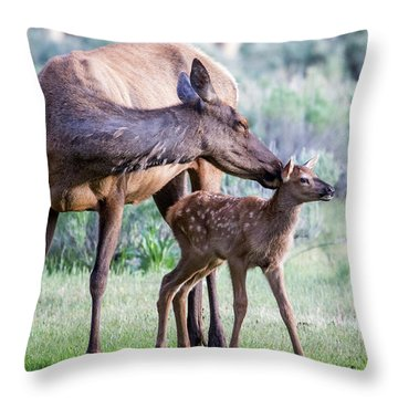 Cow And Calf Elk Throw Pillow
