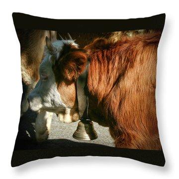 Cow Beautiful - Throw Pillow