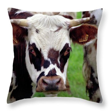 Cow Closeup Throw Pillow