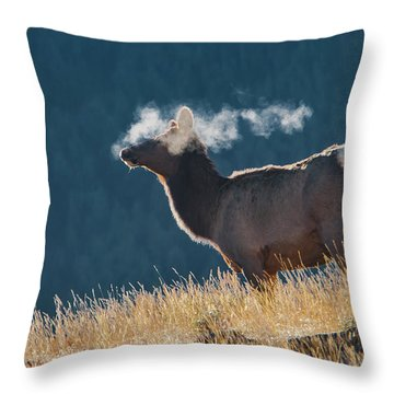 Cow Elk With Steamy Breath Throw Pillow