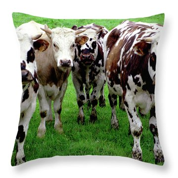 Cow Group Throw Pillow