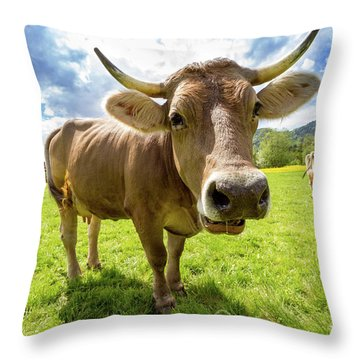Throw Pillow featuring the photograph Cow In Meadow by MGL Meiklejohn Graphics Licensing