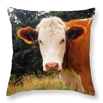 Throw Pillow featuring the photograph Cow In Pasture by MGL Meiklejohn Graphics Licensing