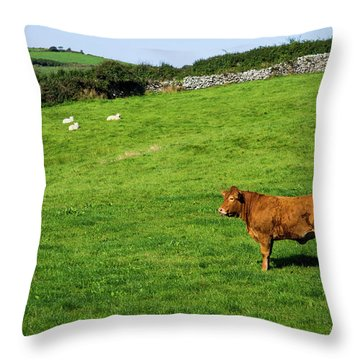 Cow In Pasture Throw Pillow