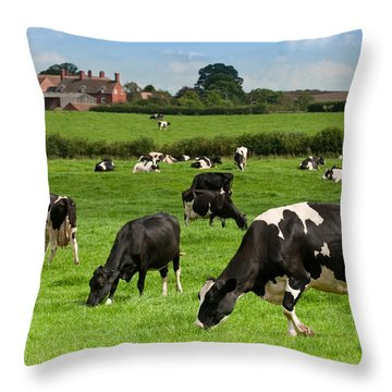 Cow Landscape Throw Pillow by Amanda Elwell