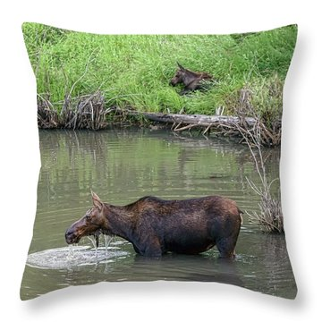 Throw Pillow featuring the photograph Cow Moose And Calf by James BO Insogna
