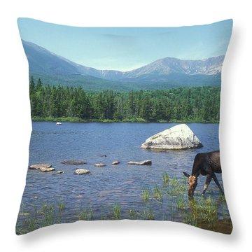 Cow Moose And Mount Katahdin Throw Pillow
