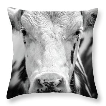 Cow Portrait Throw Pillow