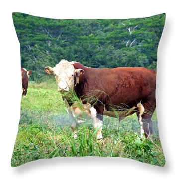 Cow Today Throw Pillow