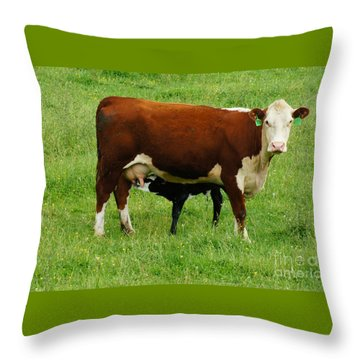 Cow With Calf Throw Pillow by Debra Crank