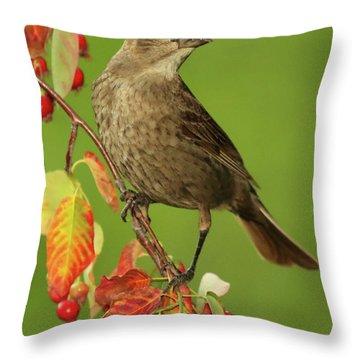Cowbird Among Berries Throw Pillow