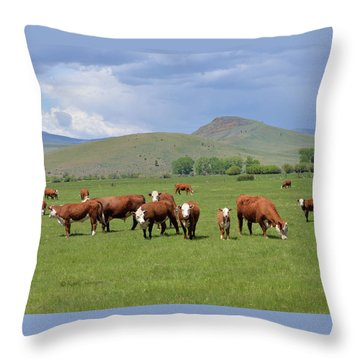 Cows And Calves Throw Pillow