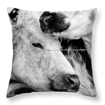 Throw Pillow featuring the photograph Cows Behind Barbed Wire by Nick Biemans