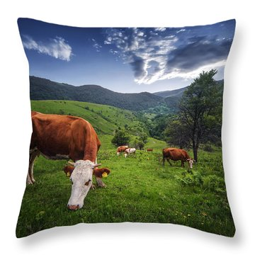 Cows Throw Pillow by Bess Hamiti