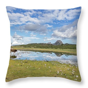 Reflected Cows  Throw Pillow