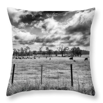 Throw Pillow featuring the photograph Cows by Howard Salmon